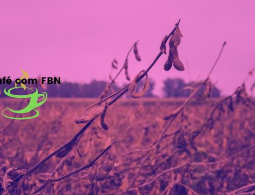 Café com FBN – Estresse hídrico na cultura de soja
