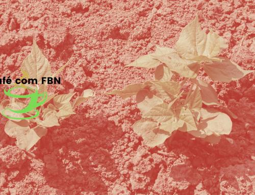Café com FBN – Análise biológica do solo